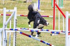 Hundehindernislaufrennen lizenzfreies stockfoto