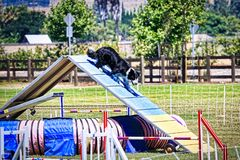 Hundehindernislaufrennen stockfotos