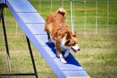 Hundehindernislaufrennen lizenzfreies stockbild