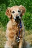 Hundeholdingstethoskop stockbilder