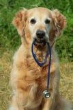 Hundeholdingstethoskop Lizenzfreies Stockfoto