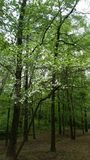 Hundeholzbaum Stockbild