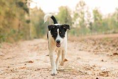 Hundejäger Stockfotos