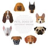 Hundeköpfe der unterschiedlichen Zucht Lizenzfreies Stockbild