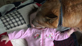 Hundeküssende Baby-übermäßig - Unkosten stock footage