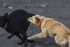 Hundekampf Stockfoto