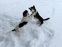 Hundekampf Lizenzfreie Stockfotografie