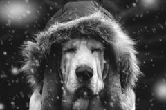 Hundekappe im Winter Stockfoto