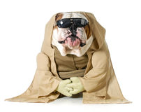 Hundeklugheit Lizenzfreies Stockfoto