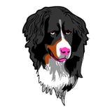 Hundekopf Lizenzfreies Stockfoto