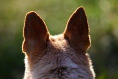 Hundekopf mit den schwarzen Ohren von der Rückseite lizenzfreie stockbilder