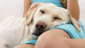 Hundekopfnahaufnahme - mit den Eigentümerhänden stock video