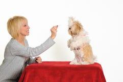 Hundekursleiter Lizenzfreies Stockfoto