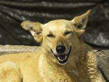 Hundelächeln Stockfotografie