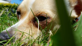 Hundeleben und Entspannung am Garten Stockfotos