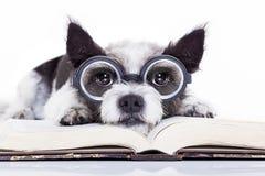 Hundelesebücher lizenzfreie stockbilder