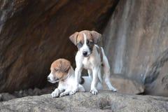 Hundeliebe 🠄unter der Familie Lizenzfreie Stockfotos