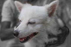 Hundeliebe und -sorgfalt Stockfoto