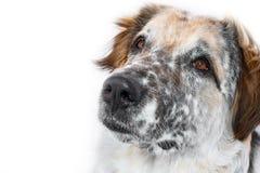 Hundemündungsnahaufnahme lokalisierte lizenzfreie stockbilder