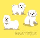 Hundemaltesische Karikatur-Vektor-Illustration Stockfoto