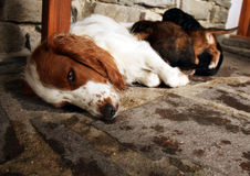 Hundemutter mit Welpen Lizenzfreie Stockfotos
