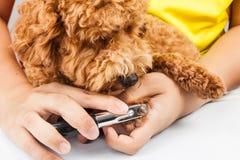 Hundenägel schneiden und während des Pflegens getrimmt Stockbild