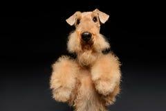 Hunden är din bästa vän royaltyfri bild