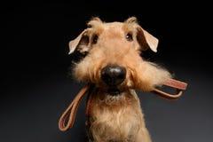 Hunden är din bästa vän Royaltyfria Foton