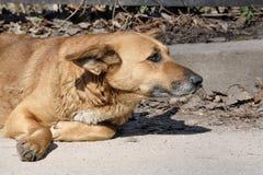 Hunden är en ledsen poochsatkäring royaltyfria foton
