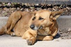 Hunden är en ledsen poochsatkäring royaltyfria bilder