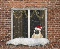 Hunden är på en fönsterfönsterbräda 2 arkivbilder