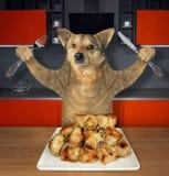 Hunden äter grillat kött i ett kök arkivbild