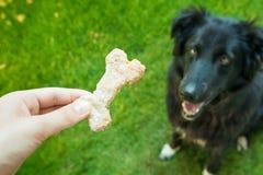 Hunden äter kakor royaltyfri foto