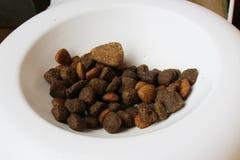 hunden äter liten mat önskar Arkivfoto