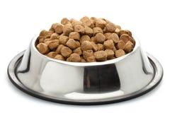 hunden äter liten mat önskar royaltyfri bild
