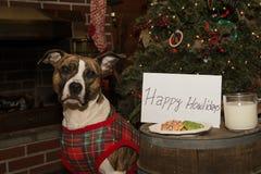 Hunden äter Santas kakor Arkivfoto