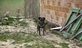 Hunden band övergett arkivbilder