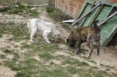 Hunden band övergett fotografering för bildbyråer