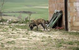Hunden band övergett royaltyfria bilder