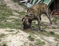 Hunden band övergett royaltyfria foton