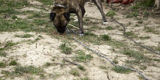 Hunden band övergett arkivfoton