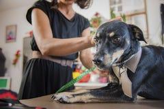 Hunden beklär mätning Arkivfoto