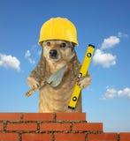 Hunden bygger tegelstenv arkivbild