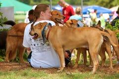 hunden dogs kvinnligägarerests arkivfoton