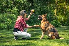 Hunden för den tyska herden ger sig tafsar till ägaren Royaltyfria Bilder
