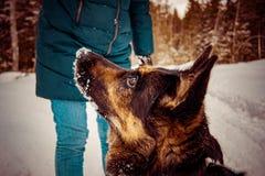 Hunden frågar för kastar snöboll fotografering för bildbyråer