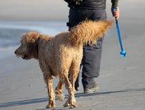 hunden går Fotografering för Bildbyråer