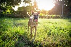 Hunden går på naturen Arkivbilder
