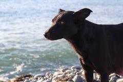 Hunden går vid havet Royaltyfria Bilder