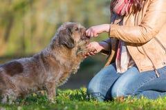 Hunden ger en kvinna tafsa royaltyfria foton
